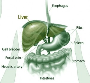 How to do a Liver Cleanse
