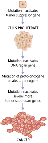 cancer_requires_multiple_mutations_from_nihen